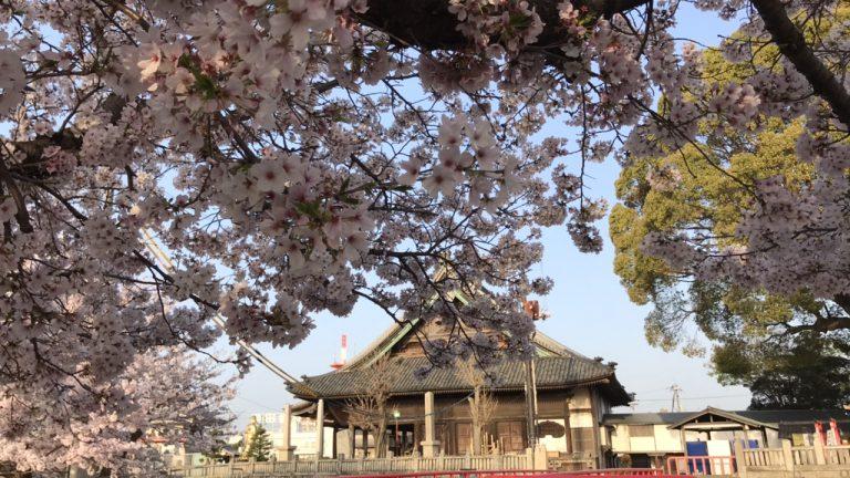 桜散り始めの朝ラン、薄着でのランニング時の必需品は?